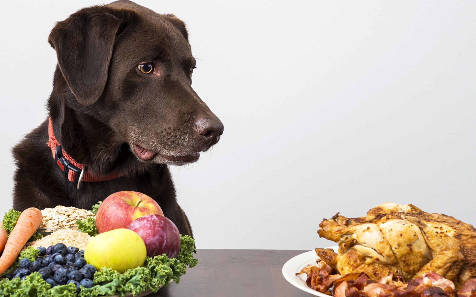 Неправильное питание может привести к проблемам выделением секрета
