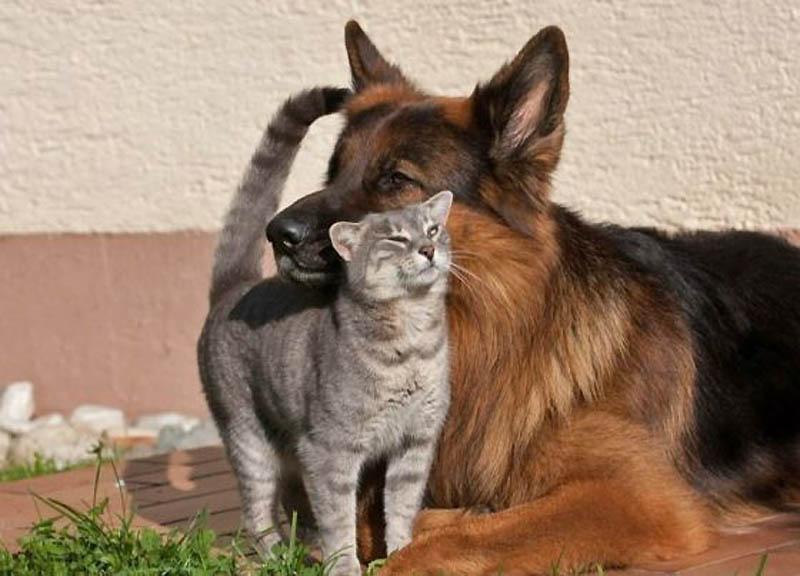 Несмотря на все сложности во взаимопонимании, кошка с собакой способны найти общий язык