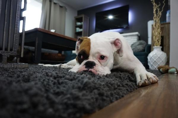 Несмотря на комфортные условия проживания, в квартирах собаки подчас обречены на одиночество