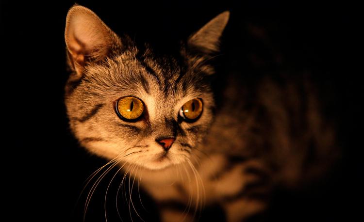 Несмотря на то, что коты заточены под ночной образ жизни, их биологические часы могут сдвигаться