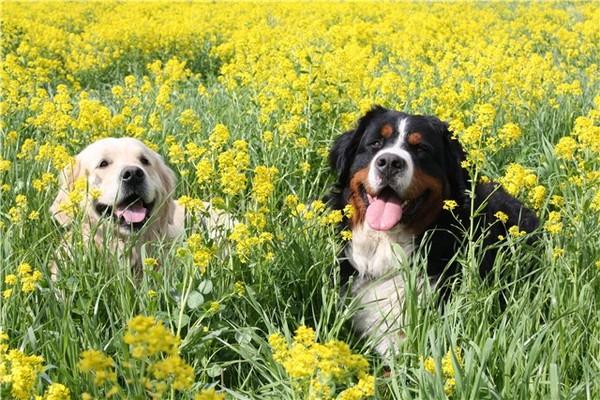 Неустанный контроль над собаками хозяина может лишь ухудшить ситуацию