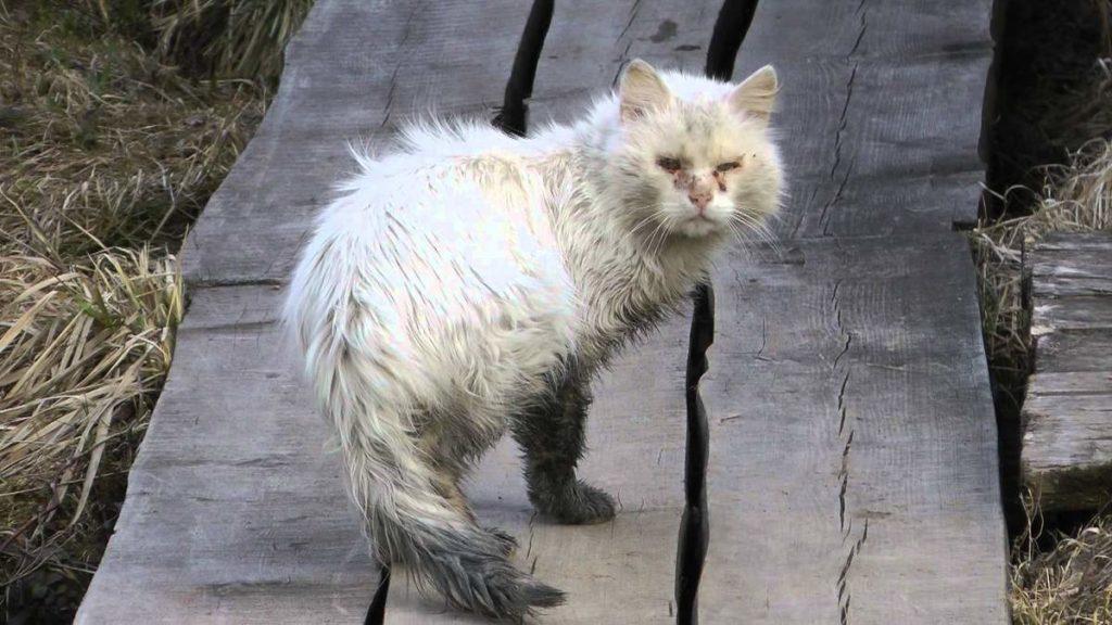 Не забывайте, что в подъезды бездомные коты приходят не от хорошей жизни