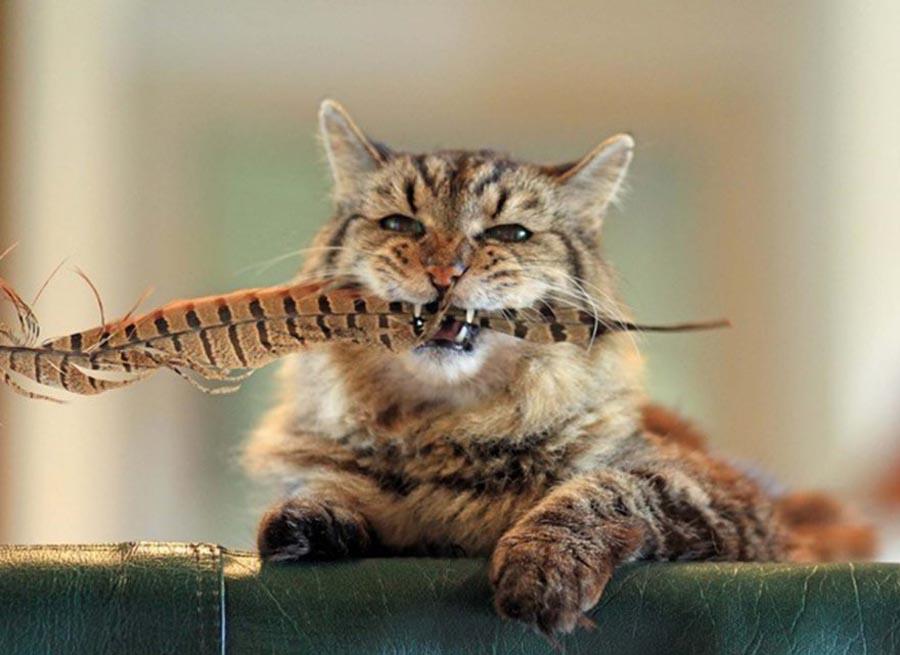 Не у всех пожилых котов изменения шерсти столь очевидны, что позволяют определить наступление старости