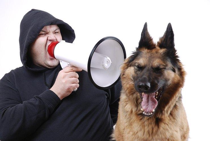 Ни за что нельзя кричать на собаку ни в щенячьем, ни во взрослом возрасте