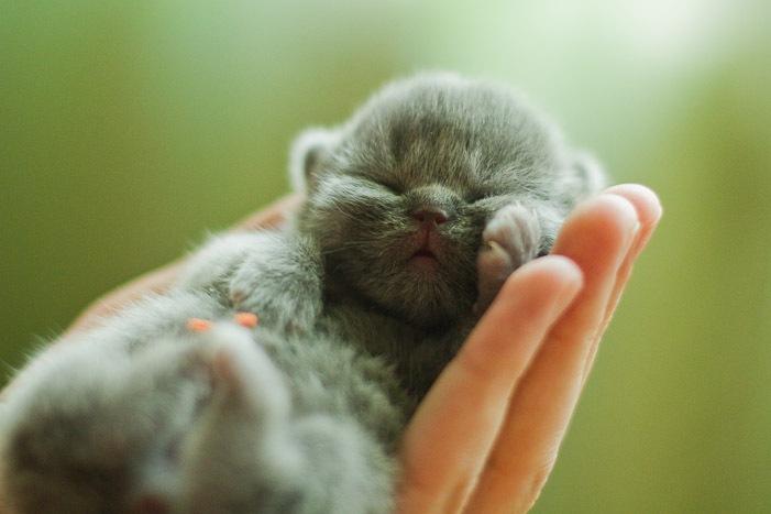 Новорожденные котята спят до 22 часов в сутки