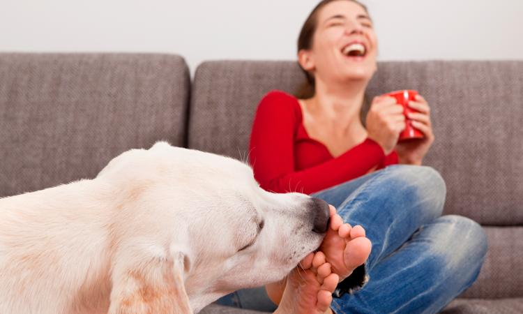 Ноги – самая доступная часть для проявления особых чувств к хозяину
