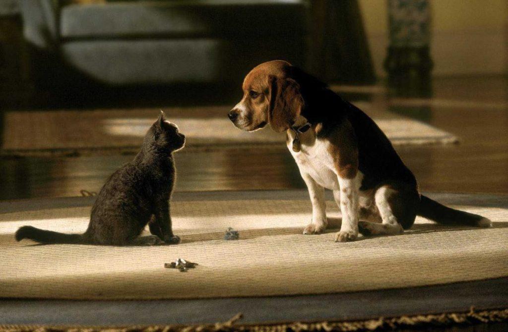 Обособление личных пространств животных позволит им быстрее привыкнуть друг к другу