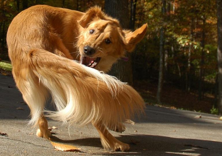 Обыденное действие в жизни здоровой собаки для щенка с гидроцефалией становится постоянным ритуалом