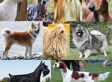 Окрас собак