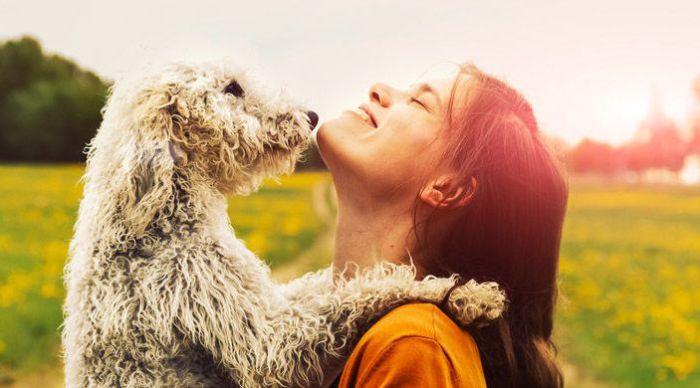 Окружите собаку лаской и любовью