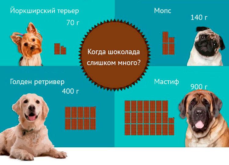 Опасная доза шоколада для собак