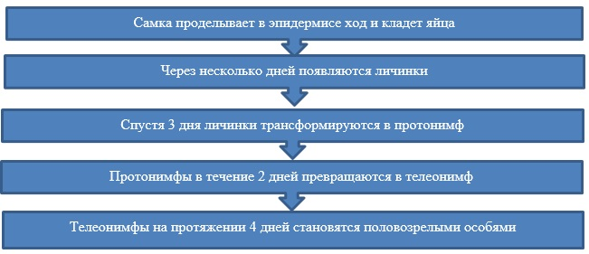 Особенности формирования