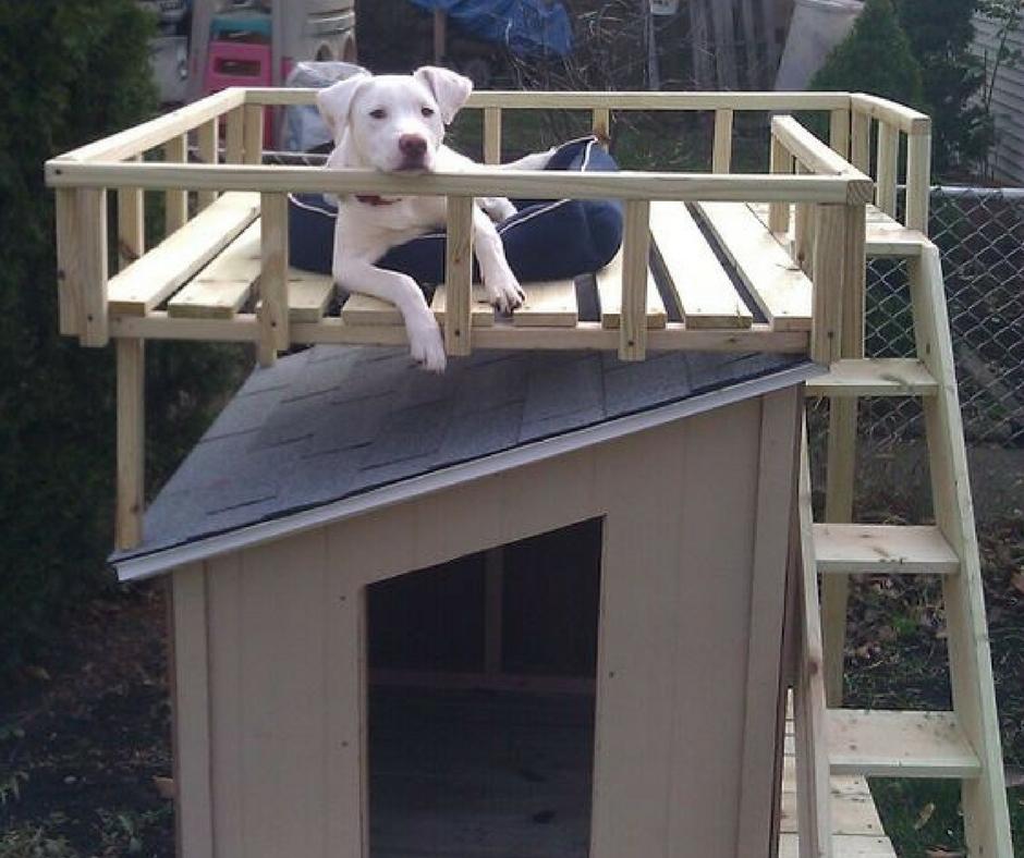 """Особо оригинальные хозяева создают для своих собак настоящие двухэтажные """"квартиры"""" с лестницей и зоной для отдыха на солнце"""