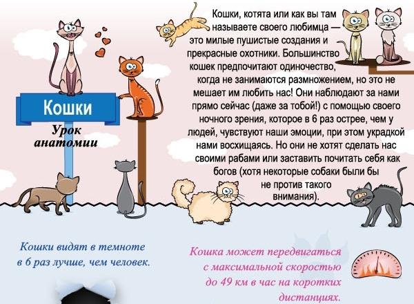 Отношение кошек к человеку