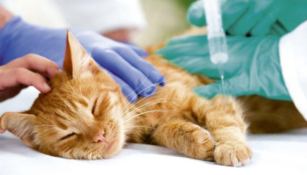 Отношение к обезболивающим препаратам для кошек остается неоднозначным