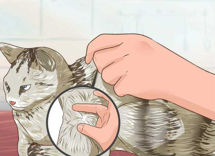 Как вылечить кошку от обезвоживания thumbnail