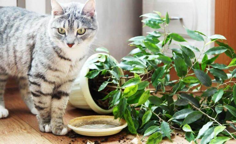От вида проступка кота зависят и методы воздействия