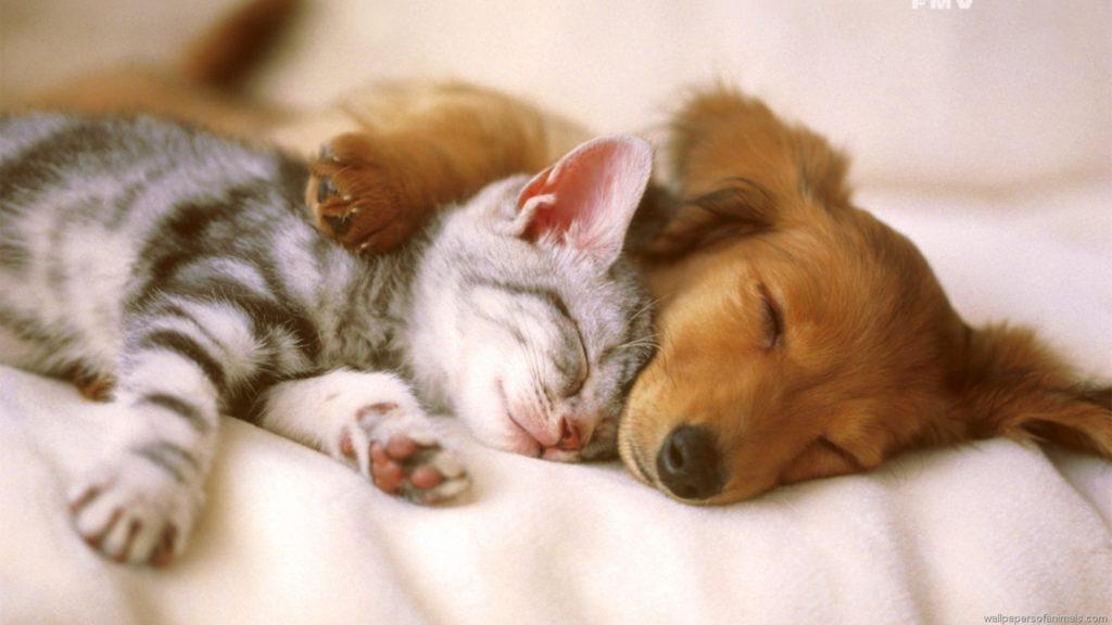 От мирного времяпрепровождения до глубокой вражды между кошкой и собакой достаточно одного шага