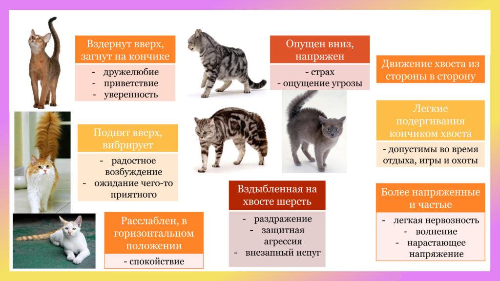 О чем может рассказать хвост кота