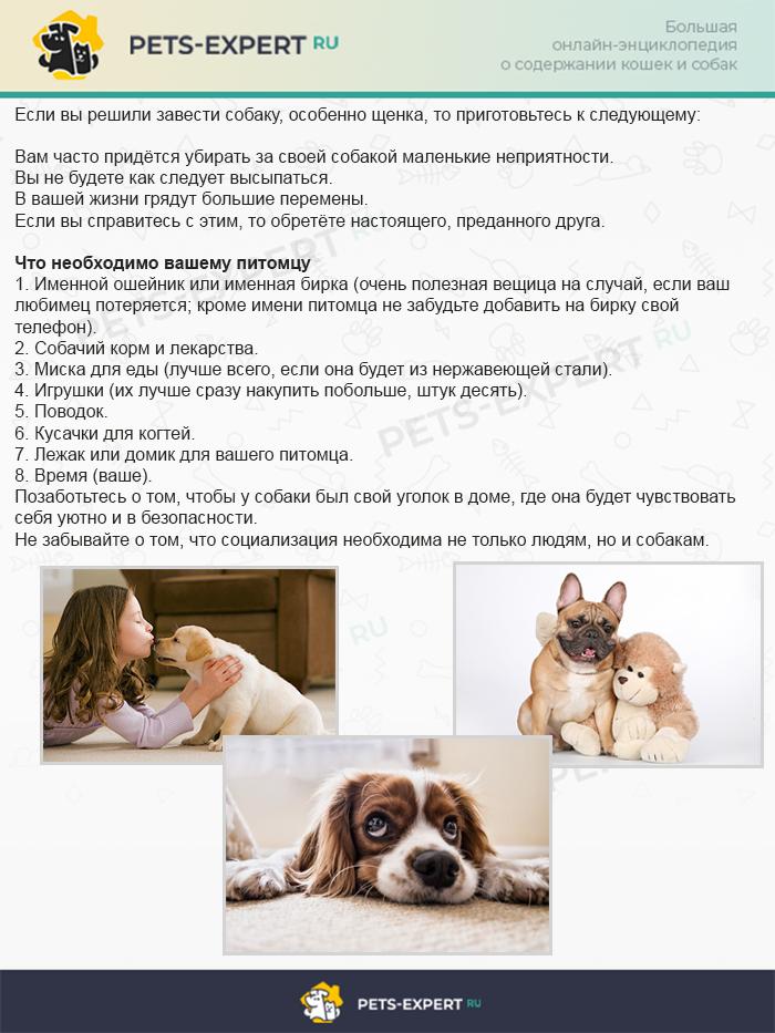 О чём следует знать, если вы решили завести собаку