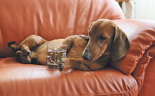 Перегрев – одна из причин повышения температуры у собак