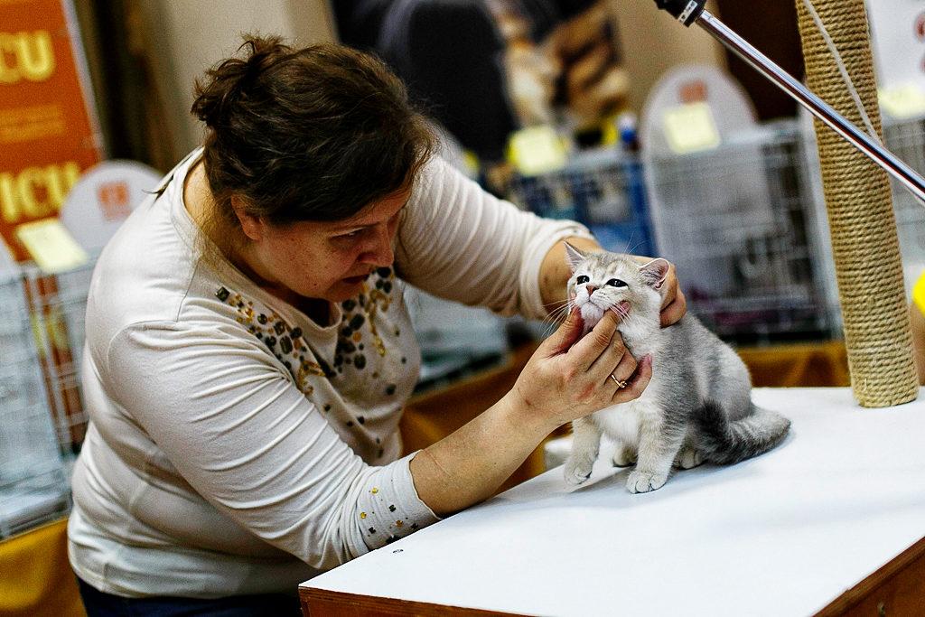 Перед вынесением вердикта кота обязательно должен осмотртеть пофессионал