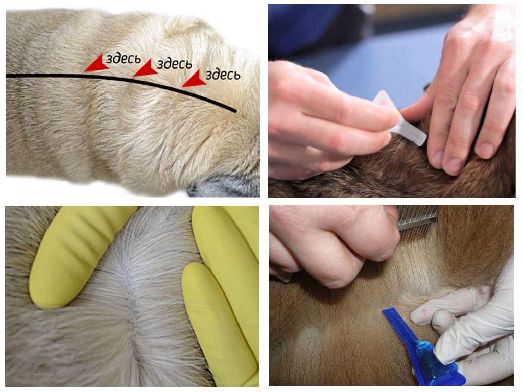 Перед нанесением препарата надо раздвинуть шерсть животного