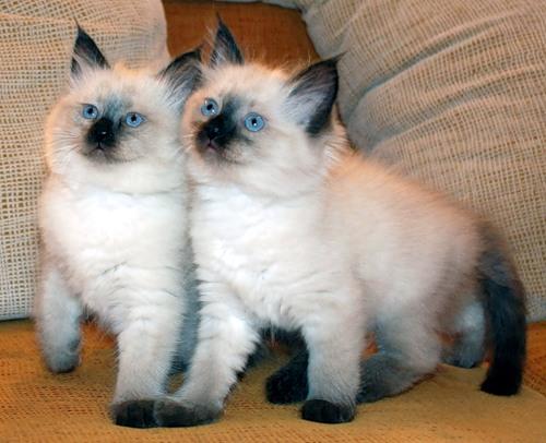 Перед тем, как приучить котенка к кличке, важно установить доверительные отношения с ним
