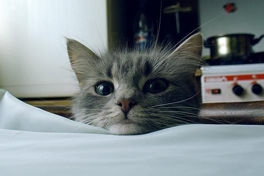 Переживший утрату владелец кота может видеть его повсюду