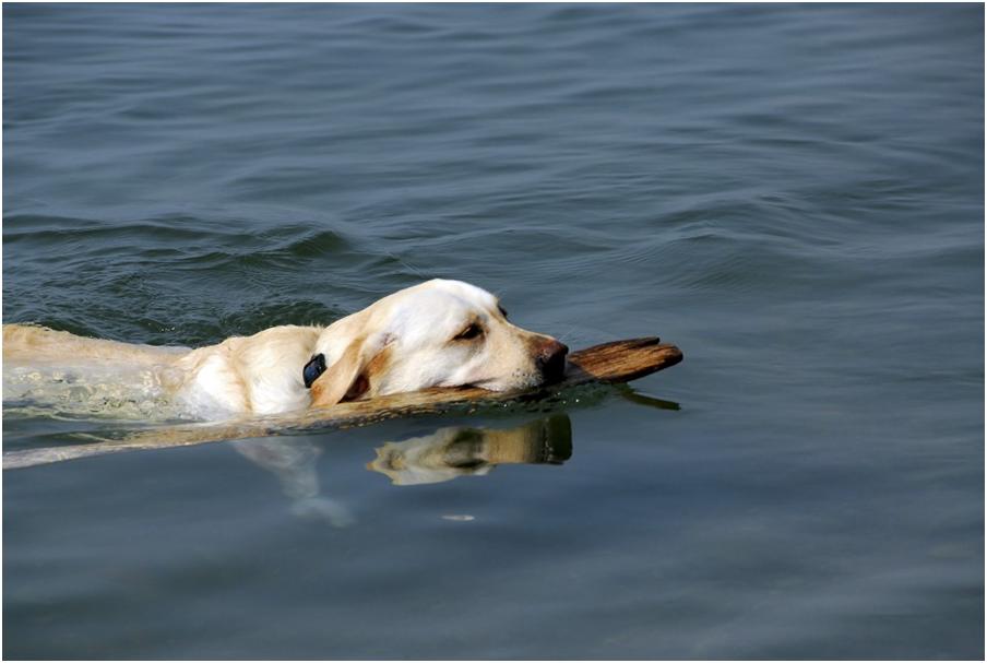 Переохлаждение во время пребывания в холодной воде приводит к развитию заболевания нижних органов дыхания
