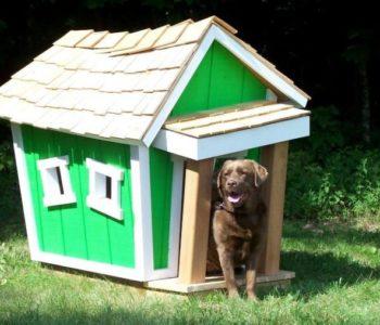 Пес выходит из оригинальной будки, напоминающей сказочный домик