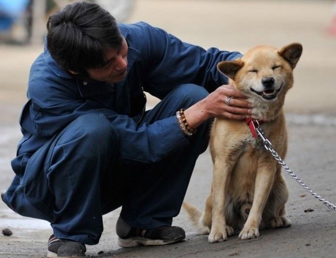 Поглаживания и ласки хозяина - лучшая похвала для собаки за выполнение команд хозяина