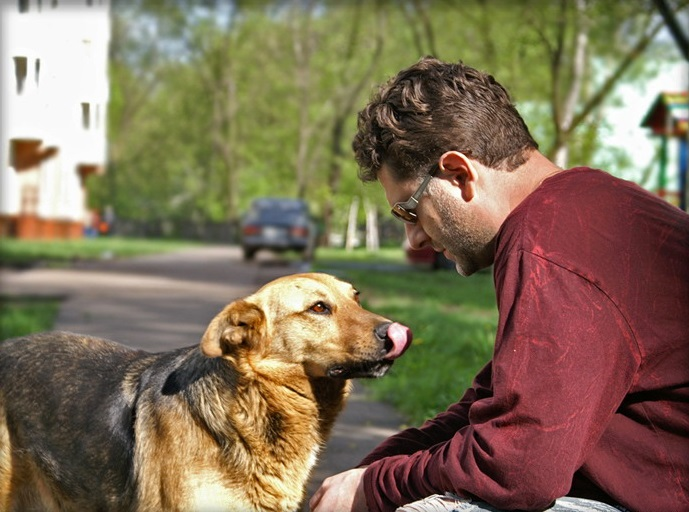 Поговорите с бездомной собакой