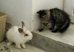 Подросший котёнок и крольчонок