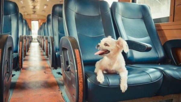 Поезда, идущие на Восток, предоставляют льготные условия собаководам