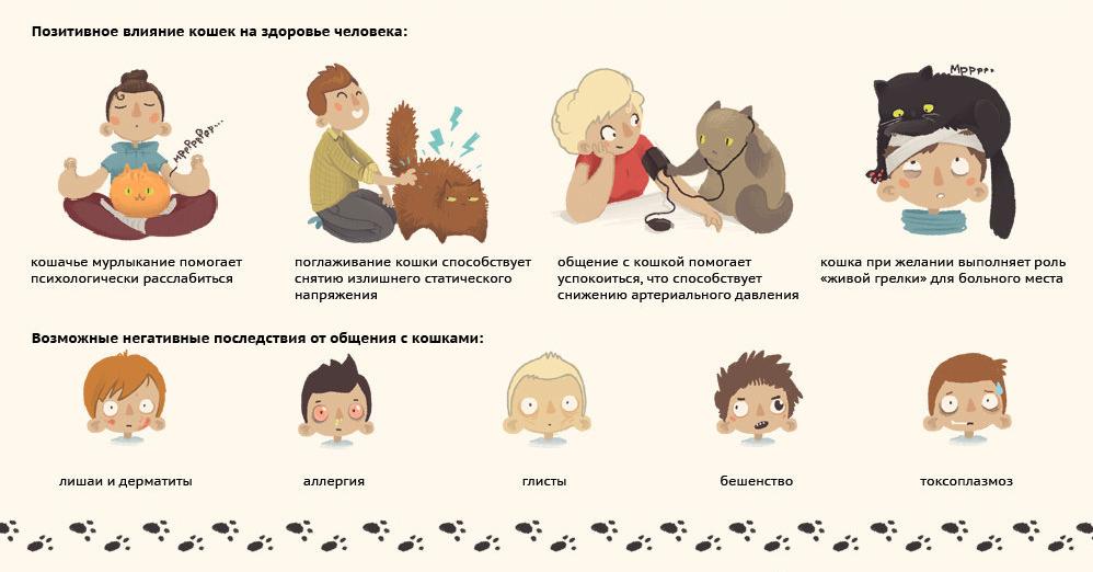 Позитивное и негативное влияние кошек на здоровье человека