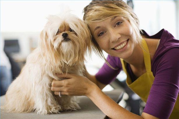 Помимо ветеринаров, научить подстриганию когтей собаки могут так же и грумеры