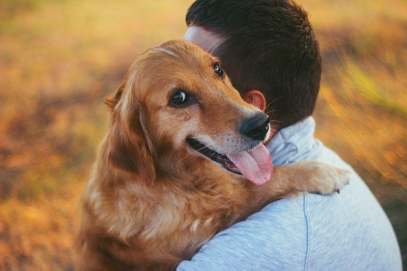 Помните: главное чувство, которое побуждает собаку к напрыгиванию на хозяина - любовь к нему