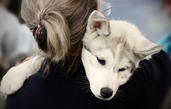 Помочь двум собакам найти общий язык может лишь мудрый хозяин