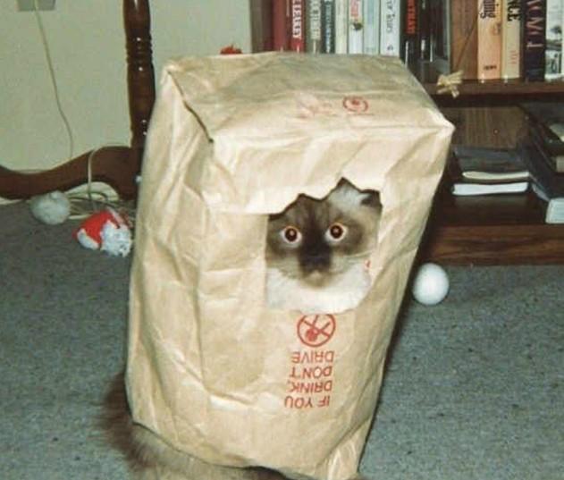 Понять, что вашему коты не хватает пространства можно и в дневное время