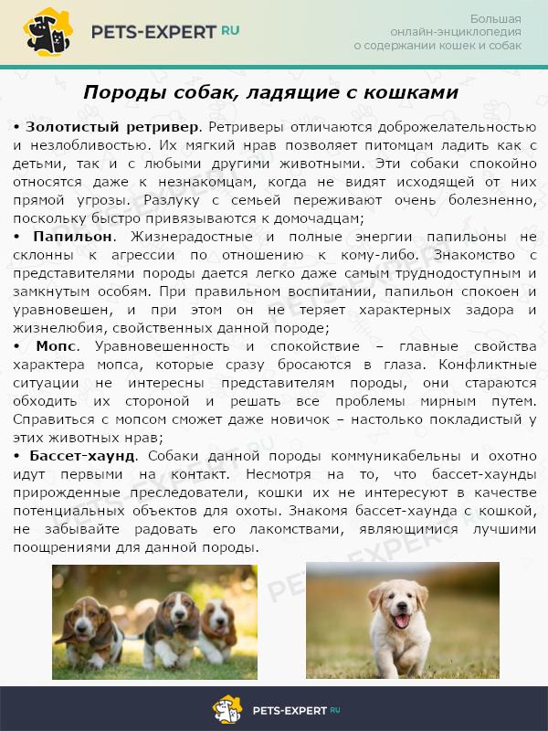 Породы собак, ладящие с кошками