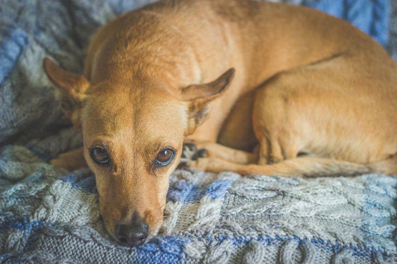 Портить вещи в квартире собака может из-за недостатка внимания