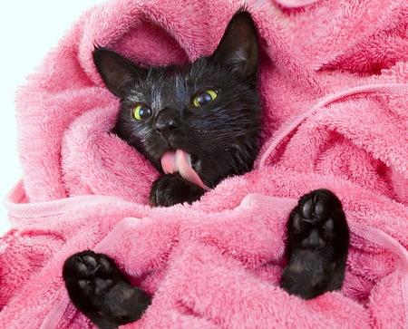 После купания заворачиваем кошку в полотенце