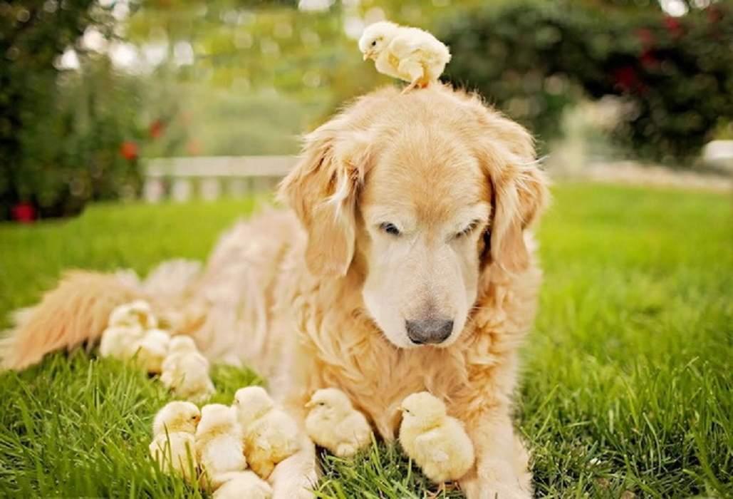 Почему бы не назвать добрейшую дружелюбную собаку Лаской?