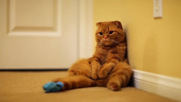 По движению хвоста можно узнать о самочувствии кота