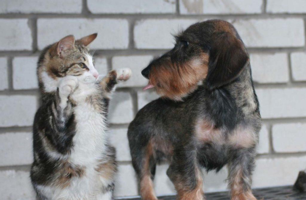 Предсказать развитие отношений между собакой и котом практически невозможно