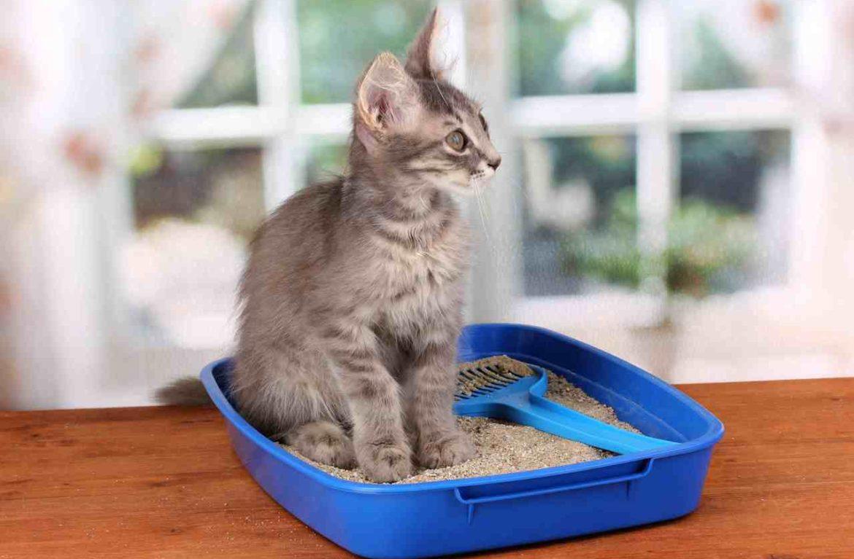 Предсказать реакцию кота на наполнитель невозможно, он подбирается на практике