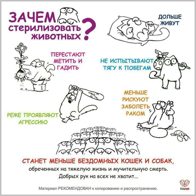 Преимущества стерилизации животных