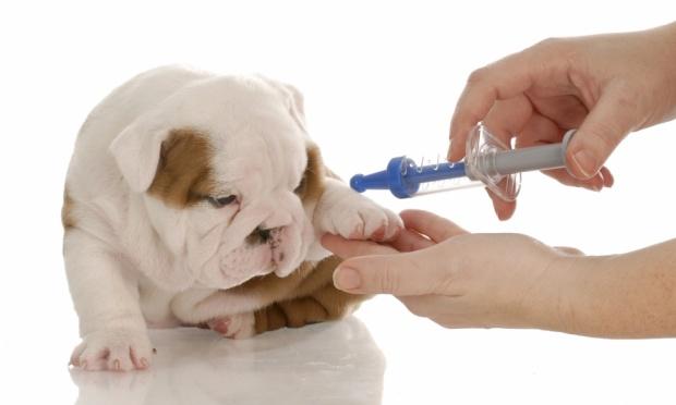 Прививки позволяют организму собаки выработать сопротивление к определенному вирусу