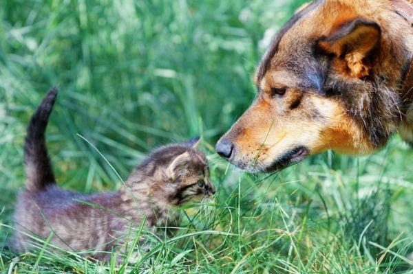 Привыкание к запаху новичка является важнейшим этапом знакомства животных